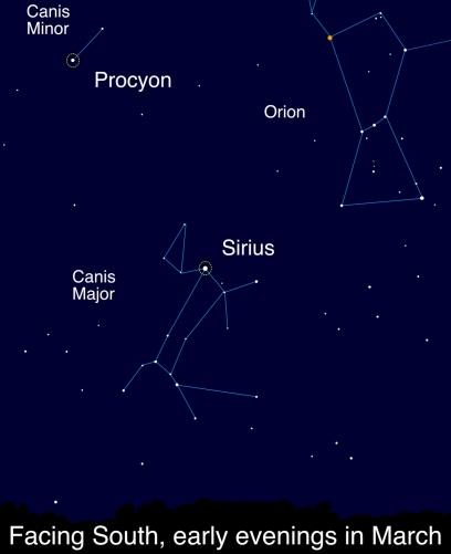 Sirius and Procyon.jpg
